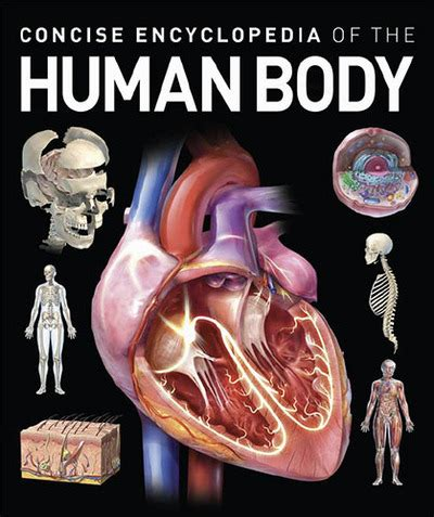 concise encyclopedia of the human body by chain sales bargain booksamillion com books