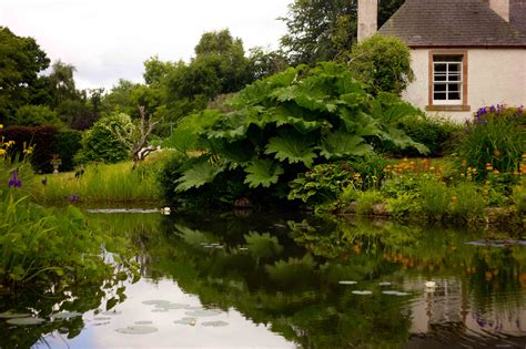 the pond house the dower house daisy dower