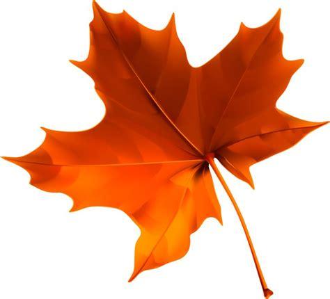 clipart autumn leaves 15 best clip autumn leaves images on