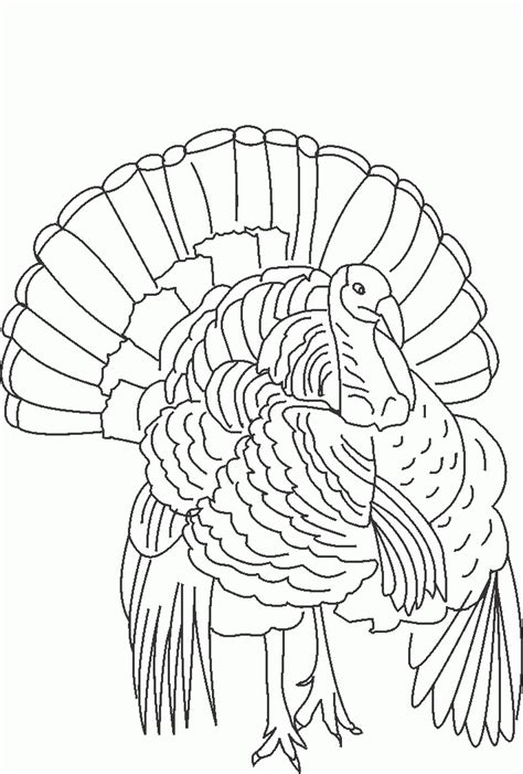 turkey hunting coloring page wild turkey coloring page coloring home