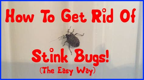 get rid of bugs in backyard how to get rid of stink bugs youtube