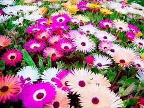 imagens de flores e rosas flores e paisagens lind 237 ssimas com m 250 sicas cl 225 ssica youtube