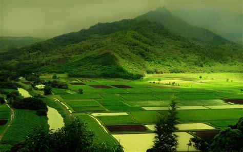 kumpulan gambar pemandangan alam sawah
