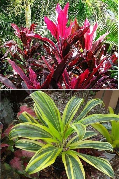 jenis jenis  macam macam tanaman hias part iv bibit