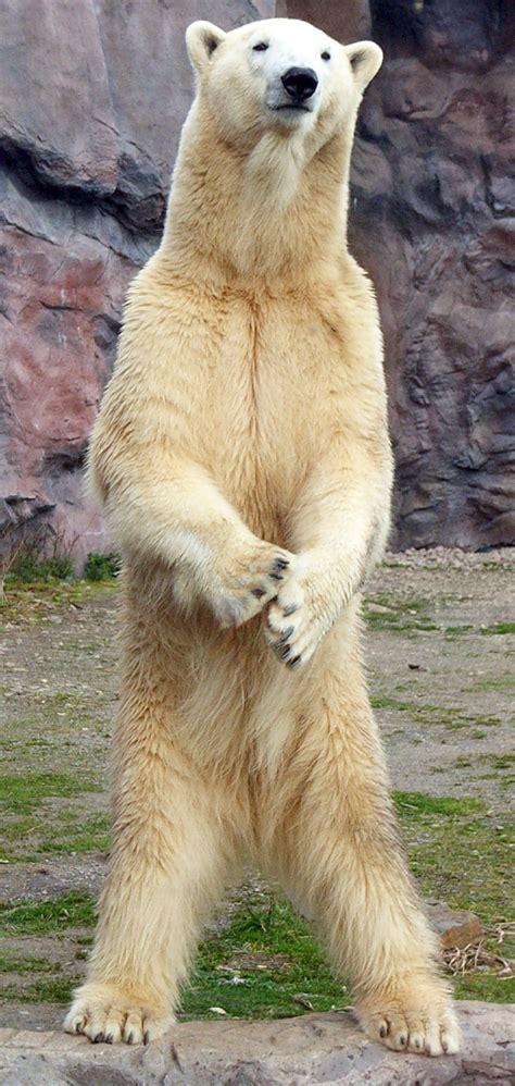 zoologischer garten vs tierpark ruhr zoo
