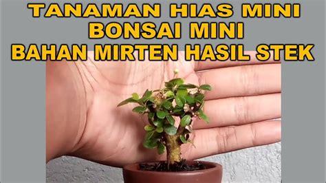 membuat tanaman hias mini  bonsai mini bahan mirten