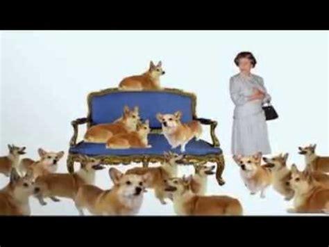 dogs 101 corgi dogs 101 pembroke corgi