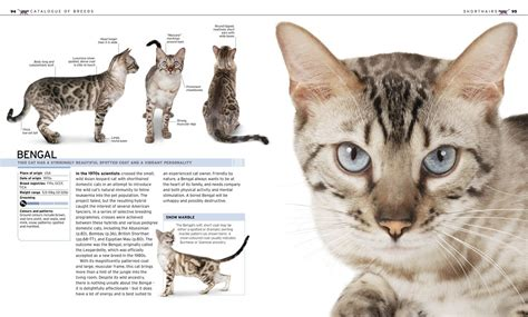 breed book the complete cat breed book dk publishing 2013 pdf gooner torrent