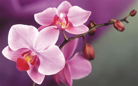 orchid flower weneedfun
