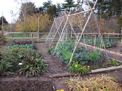 Vegetable Garden Free Stock Photo Public Domain Pictures Netting For Vegetable Gardens