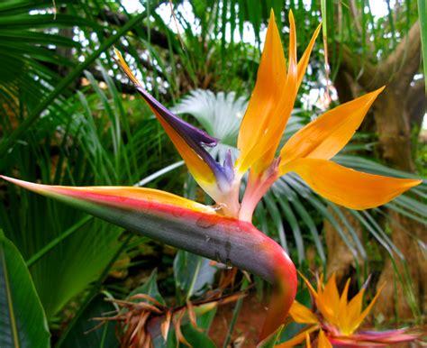 exotische potplanten met bloem tropische planten potplanten buiten schaduw