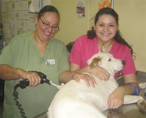 puppy s vet visit puppy s vet visit animal hospital