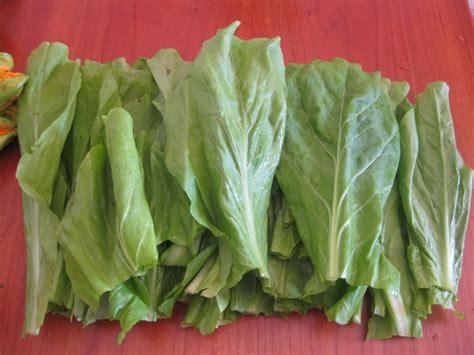 alimenti proteici con pochi grassi ricetta tagliatelle alla lattuga e pistacchi light