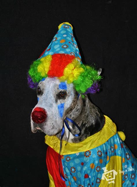 clown costume for dogs clown costume