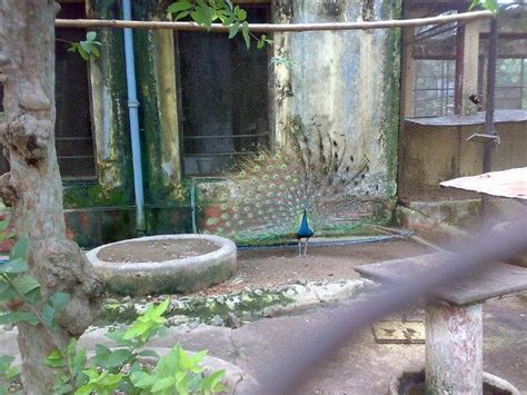 Zoological Garden by Zoological Garden Kolkata Alipore Zoo Kolkata