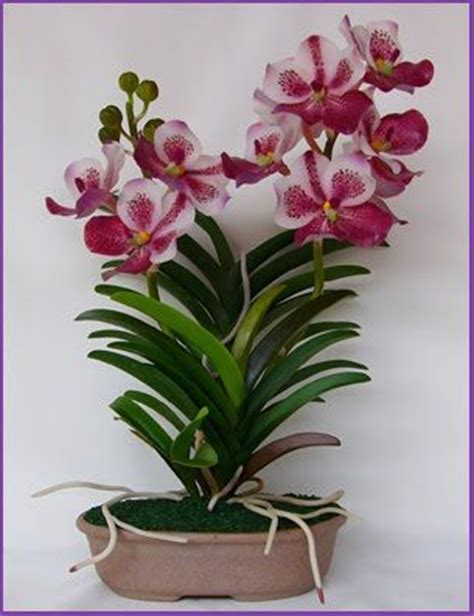 496 best potted orchids images on