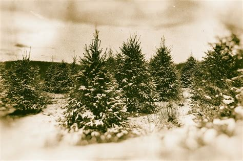 hl supply blog tips for cutting your own christmas tree