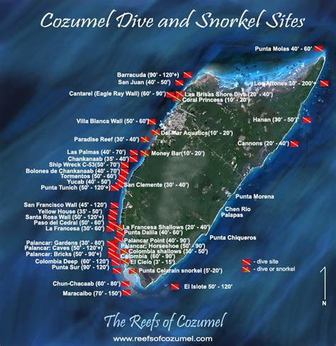 dive cozumel one of nature s treasures the reefs of cozumel