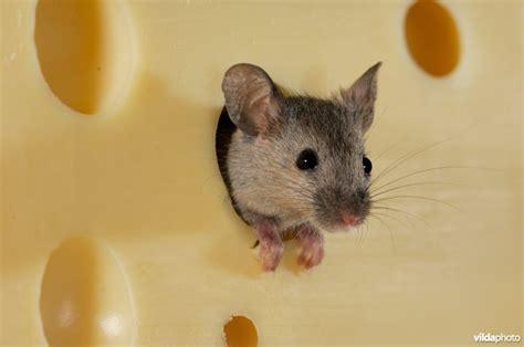 huis muis vilda
