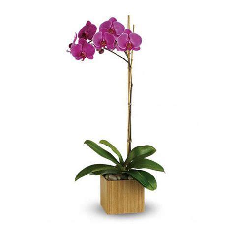 Lu Hias Bentuk Anggrek Ungu rangkaian anggrek bulan murah harga 350 ribu toko bunga murah