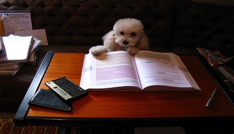 puppy studying this is studying for the lsat are you lsat