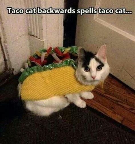 images  taco tuesday  pinterest taco