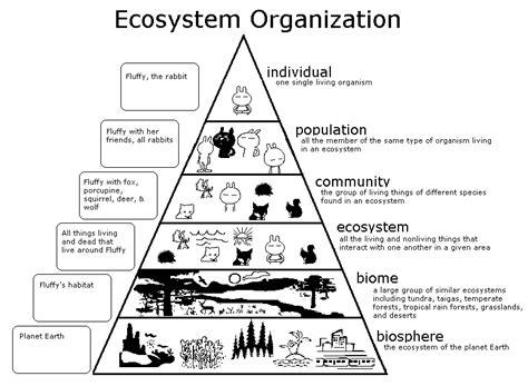 biography pyramid graphic organizer ecosystem triangle graphic organizer for population bing