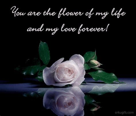Rose Wallpapers Friendship Quotes