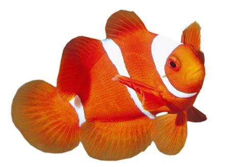 imagenes de animales del mar imagenes de animales del mar amigos de gabito gabitos