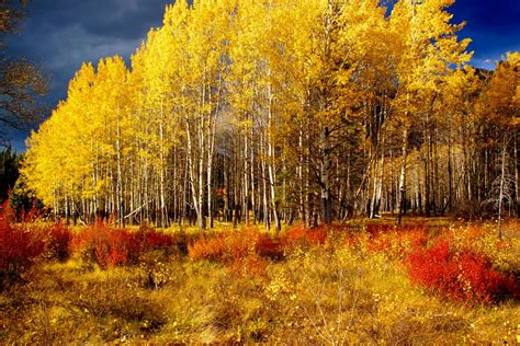 in fall panoramio photo of fall in the rockies