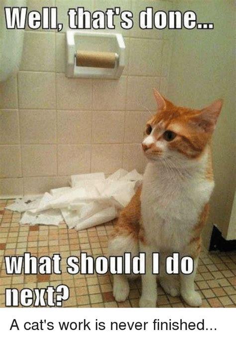 Working Cat Meme - 25 best memes about cat work cat work memes