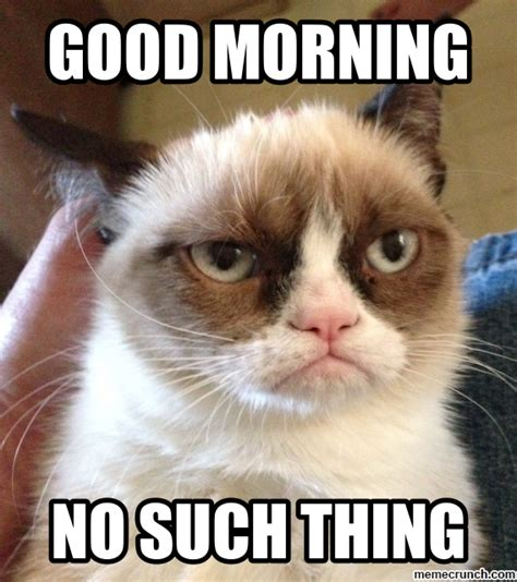 Good Meme Cat - the gallery for gt good morning angry cat
