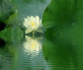 Lotus Animation Sedona Healing