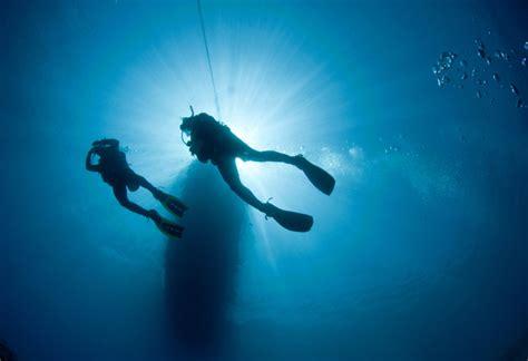 dive sea sea diving diving at sea world