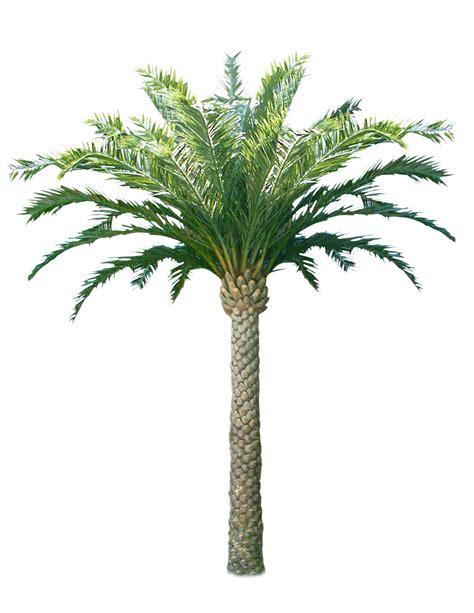 Le Palmier palmiers recipes dishmaps