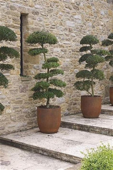 6 cherry tree drive yeovil the 25 best topiary trees ideas on pine cone tree topiaries and topiary