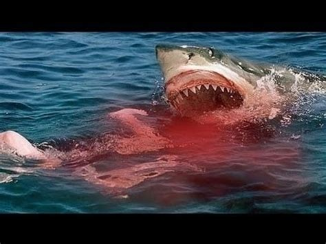 great white shark attacks on humans caught on tape – shark