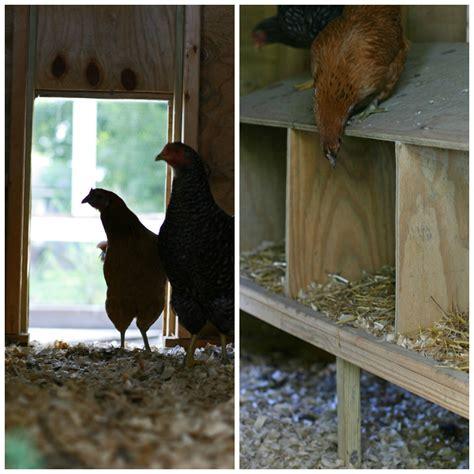 chickens for eggs in backyard 100 raising backyard chickens for eggs best chicken breeds gogo papa