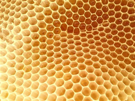 Honey Comb Honeycomb on the topography of honeycomb