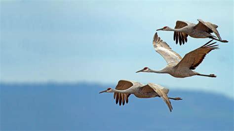 birds audubon