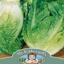 Benih Bibit Biji Selada Merah Lettuce Salad Bowl Lokal benih selada salad bowl