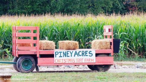 piney acres christmas tree farm and pumpkin patch
