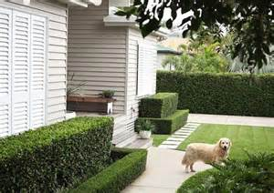 hedging ideas for gardens 25 best ideas about garden hedges on hedges
