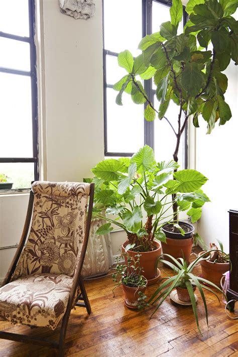 sneak peek   indoor plants designsponge