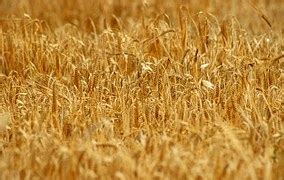 free photo: hay, straw, bale, farm, texture free image