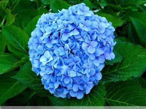 imagenes de rosas hermosas unicas top 10 las 10 flores mas hermosas del mundo youtube
