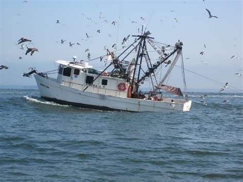 the shrimp boat shrimp boats becky eldredge