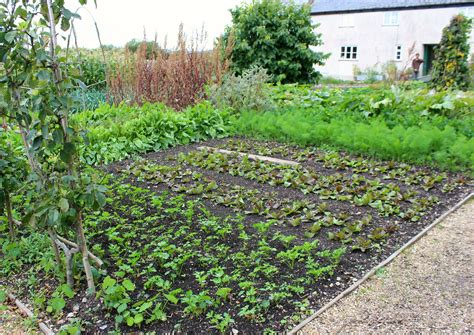 river cottage garden nutritious deliciousness lifestyle food health