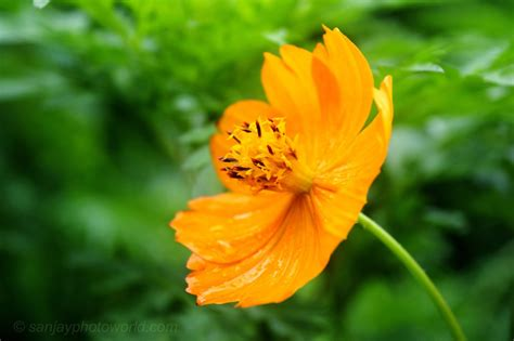 Flower Photography by Sanjay Photo World Hd Flower Photography Vol 03