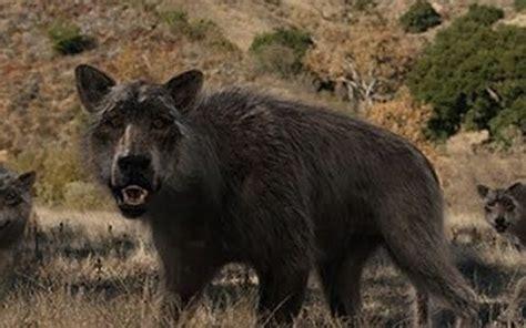 the skinwalker ranch | sasquatch chronicles
